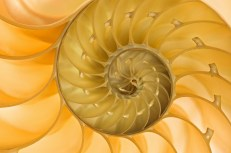 Spiral Soul